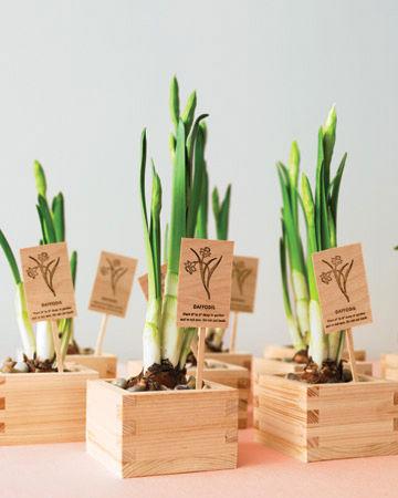 bomboniere-con-vaso-in-legno