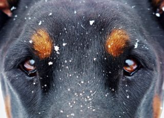 eyes-and-the-snow-flakes-1133707_1920