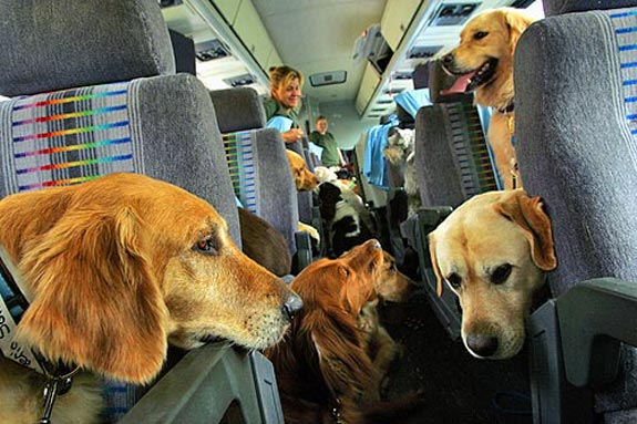foto di  www.petpassion.tv