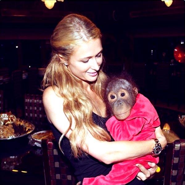 02-paris-hilton-scimmia