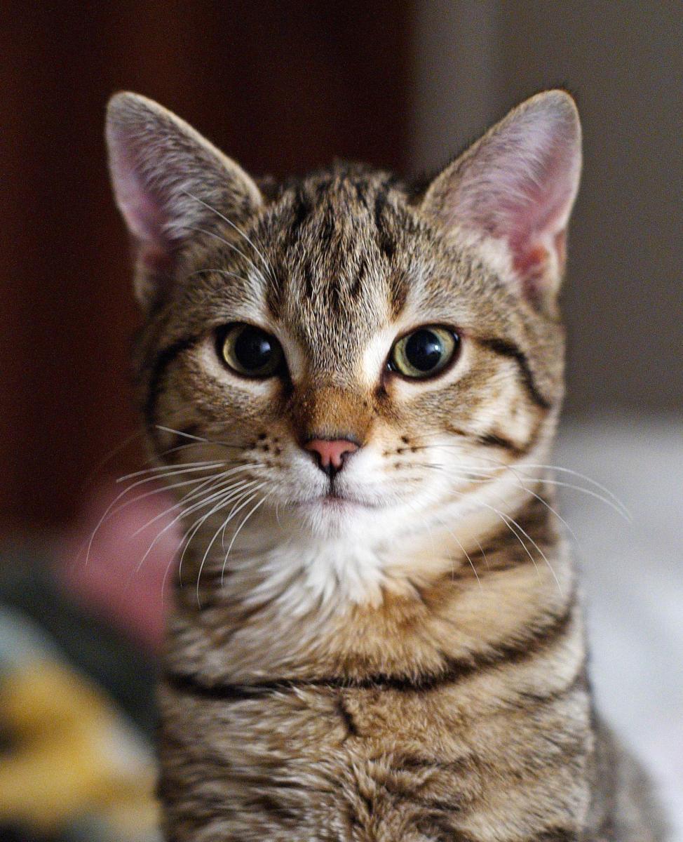 Non Tutto Si Mangia Gli Alimenti Che Fanno Male Ai Vostri Gatti
