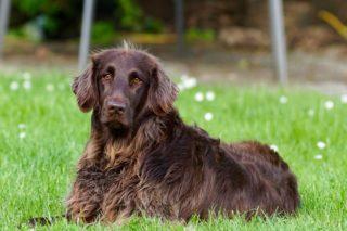 Cane maschio: castrazione sì o no?