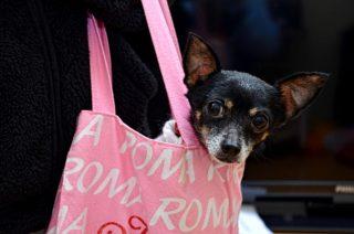 Vacanza con il cane: cosa mettere in borsa!