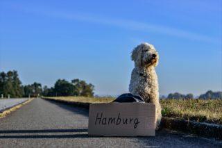Documenti e vaccinazioni: il necessario per partire con il proprio cane!