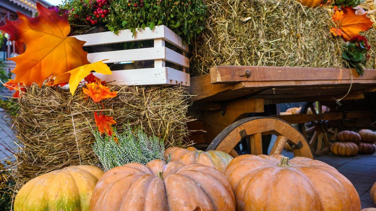 Il Significato Di Halloween.Il Significato Di Halloween Per I Bambini Sei Mamma Tratto Rosa