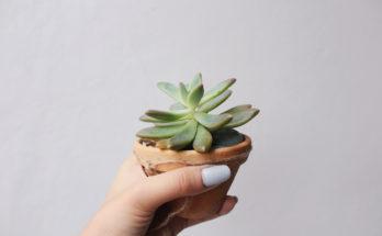 piante dal potere rilassante