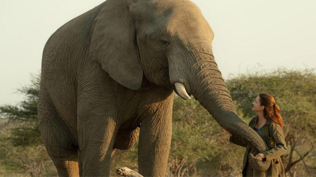 un safari per natale