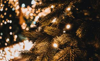 Albero di Natale vero o sintetico