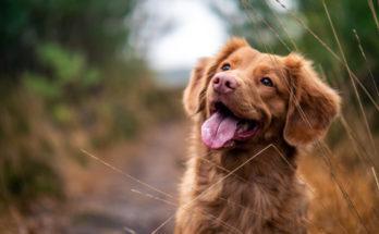 Non abbandoniamo i cani