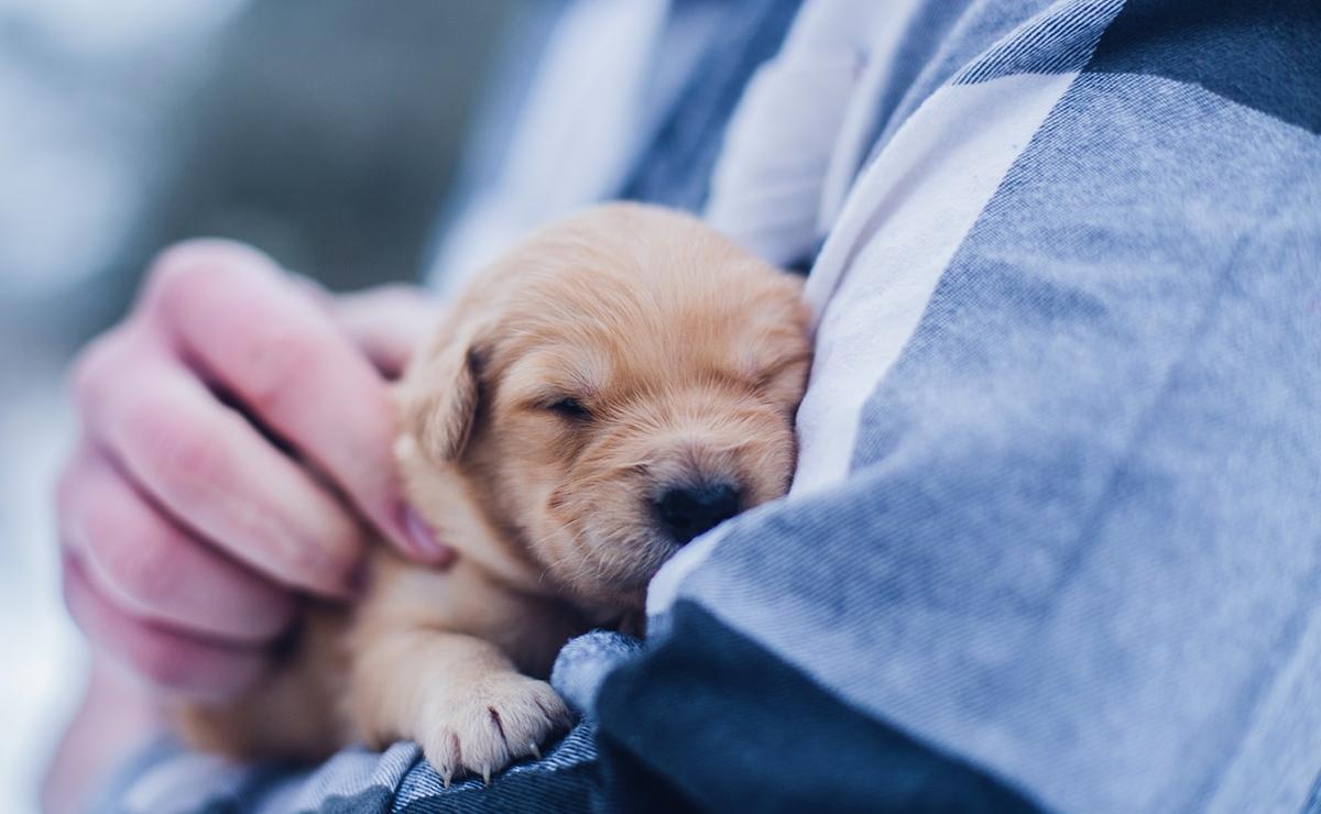 L'educazione del cucciolo