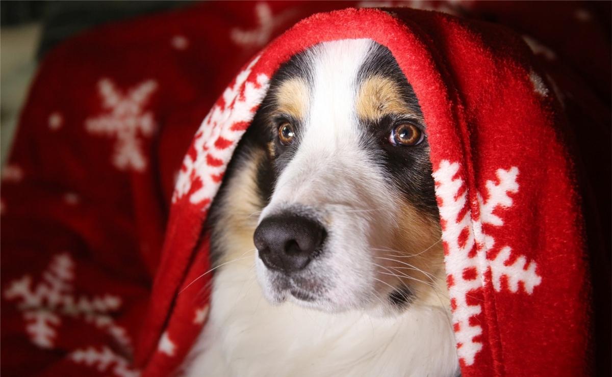 Idee regalo per cani